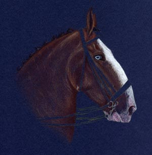 Coloured pencil Clydesdale by Jennifer Rose Phillip