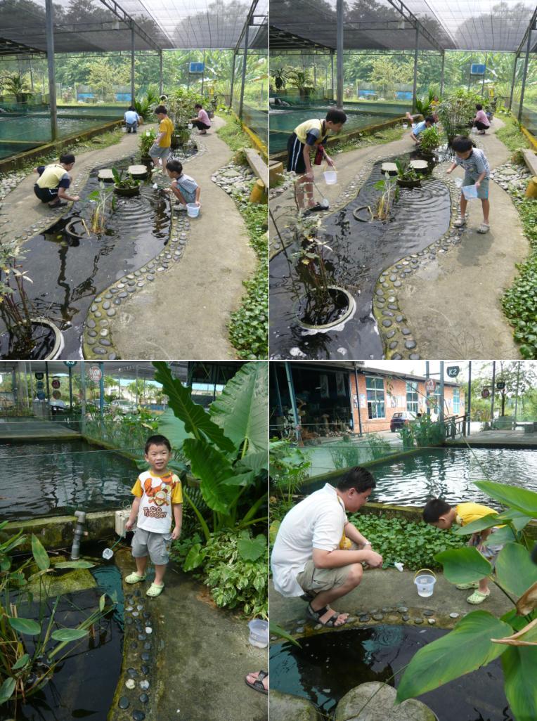 The heng family travel lifestyle blog longkang for Fish farm 3