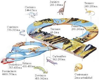 Periodos de la evoluci?n de la vida en la tierra