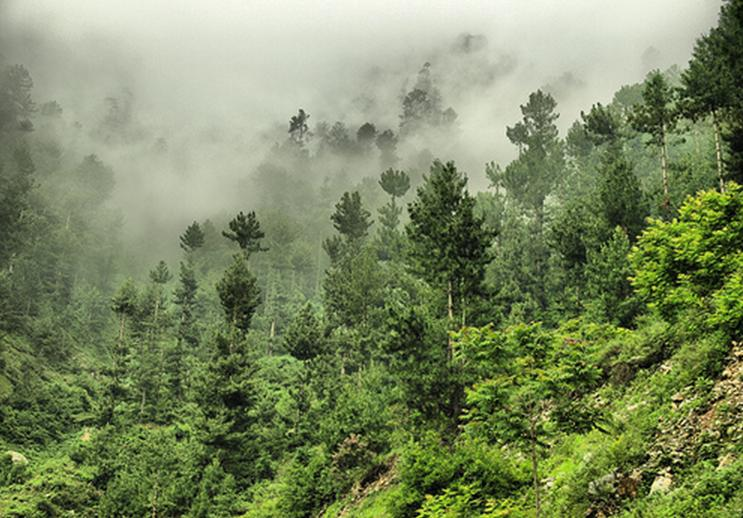 visit to hill station on murree for class 7 in english Essay on a visit to a hill stationit is a great pleasure to visit a hill station in summer it was in these months that i visited the murree hills i went there to spend a part of my summer vacation.