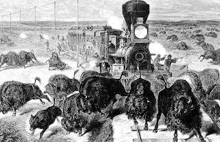 shooting buffalo genocide native american