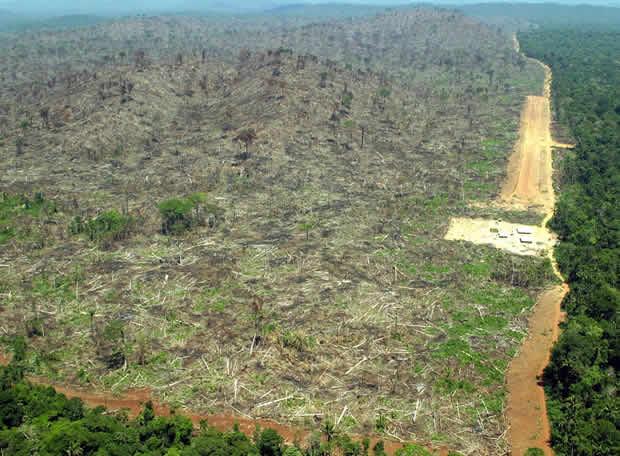 """En aquesta imatge podem veure una petita part de les 17 milions d'hectàrees que es talen a l'any al nostre Planeta. Aquesta imatge és un exemple de l'avarícia de l'ésser humà, que no mesura la importància que tenen els boscos per l'ecosistema i per al nostre futur ,  ja que la desforestació afecta el mitjà de vida entre 200 i 300 milions de persones que depenen dels boscos per obtenir menjar, abric i combustible. Si talem els boscos, acabem amb els ecosistemes, i si acabem amb els ecosistemes acabarem amb el Planeta. MARC PIQUÉ LEÓN 1 BATX  """"A"""""""