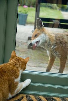 http://3.bp.blogspot.com/_bkFIPLIOGL8/SUFwF9zIvnI/AAAAAAAAbl0/uOEyUaygvBQ/s400/fox.jpg