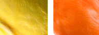 Genetica en canarios, ideas de genética