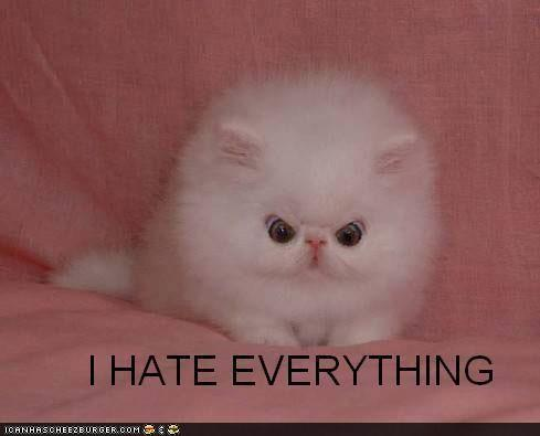 hate-everything-kitten.jpg
