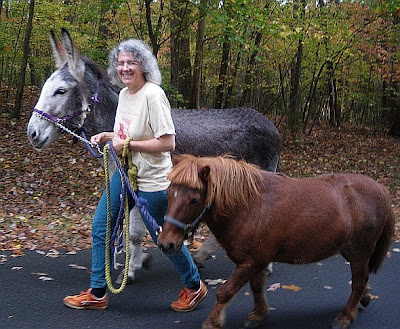 miniature horse and donkey walk together