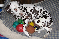 Josie With One Of Her Litters Of Pseudopups
