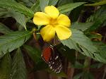 Butterfly garden, Los Lagos, Arenal