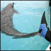 6 Million Dollar Dolphin