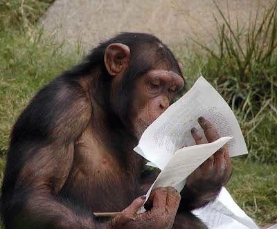Smart monkey reading