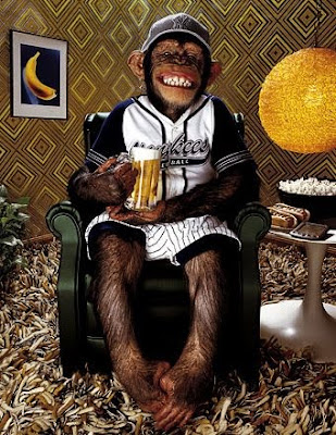 funny monkey watching tv with beer and popcorn