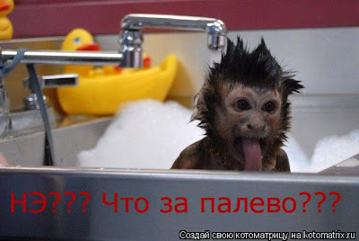 Funny little moneky in the bath
