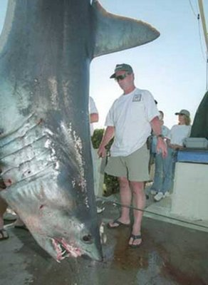 Biggest Great White Shark Ever Caught
