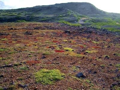 Hiking curaçao - flora and fauna