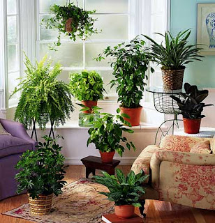 ... the upcoming weeks on light, temperature and other indoor plant tips