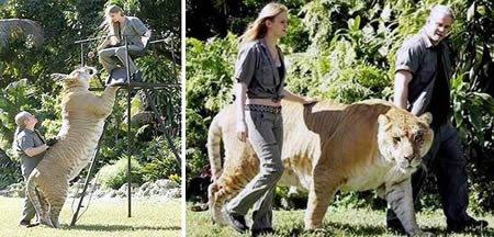 7 Hewan hewan terbesar di dunia
