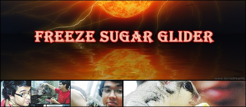 Freeze Sugar Glider