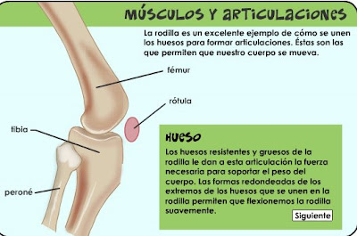 http://kidshealth.org/misc/movie/spanish/bodyBasicsKnee/bodyBasicsESP_knee.html