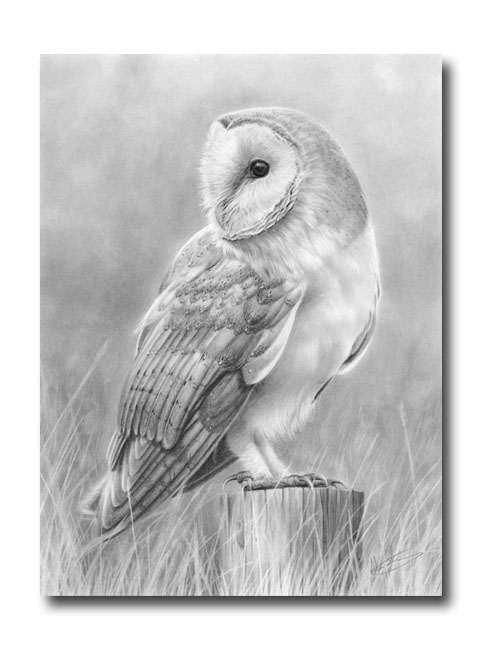 Nolon Stacey - A Pencil Artist's Blog: Barn Owl number 3 ...