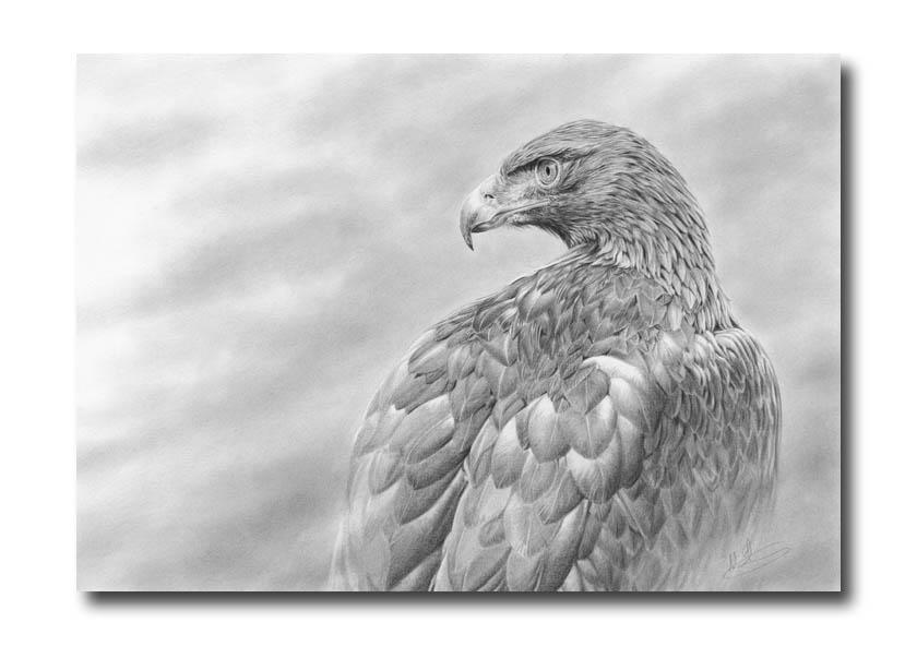 golden eagle wallpaper. wallpaper Golden Desert Eagle