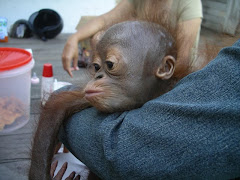 Palm oil victim. Mother killed.