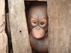 Yet another palm oil victim