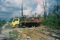 Illegal loggers in action. October 2007