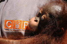 Orphaned by a palm oil company. Rescued by COP.