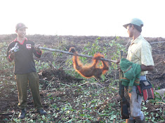 Another palm oil victim - one of tens of thousands - so far.