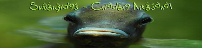 Sumergidos criadero artesanal for Criadero de peces ornamentales