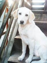 My puppy girl sasha.[miss her]