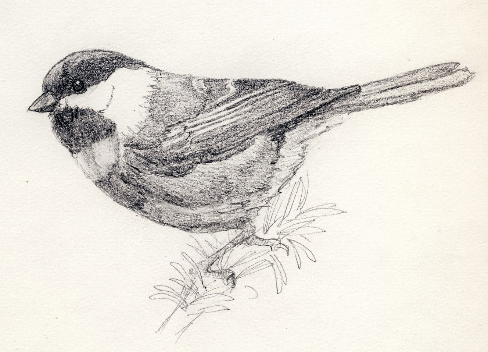birdly drawn chestnut backed chickadee graphite