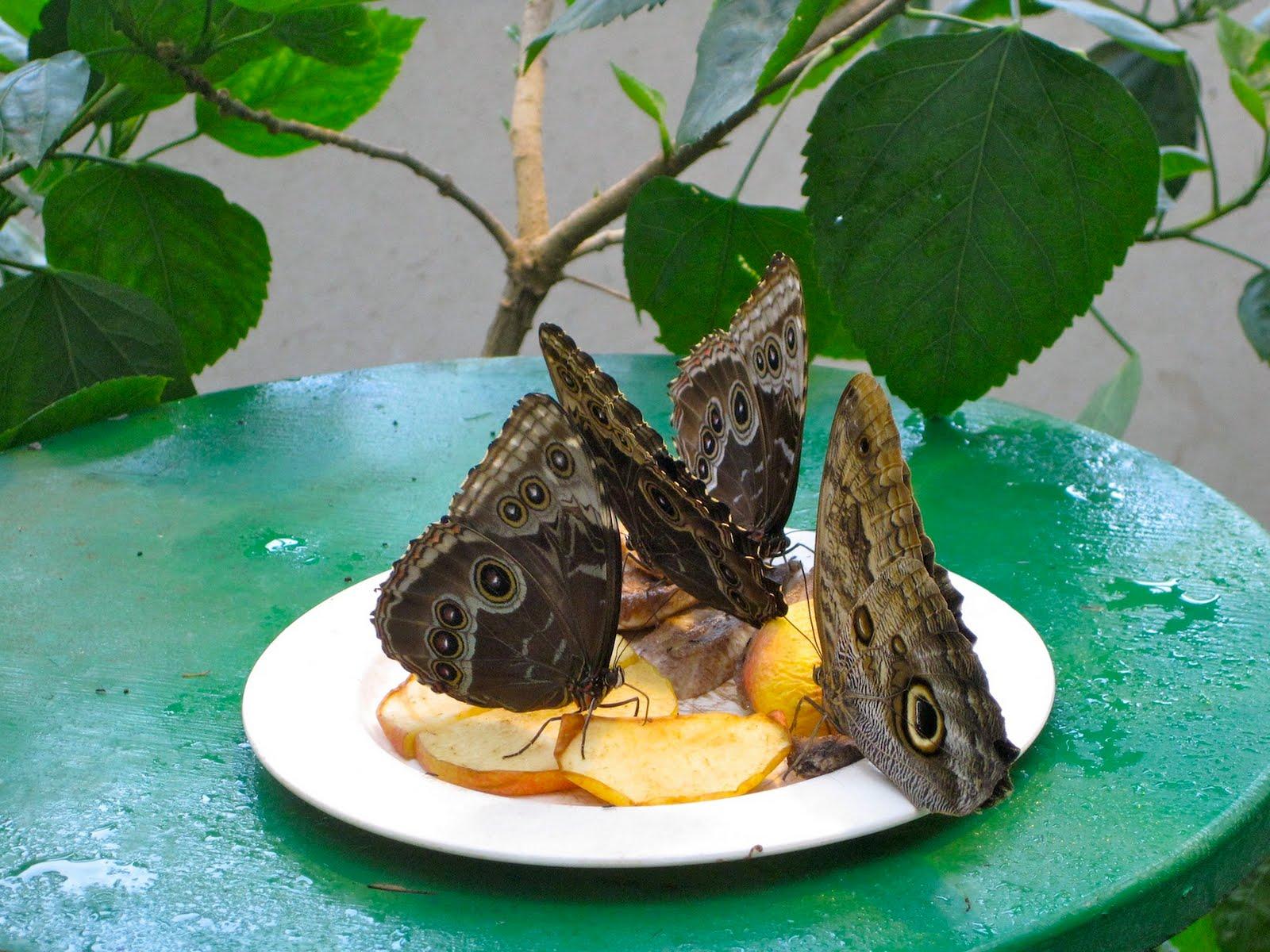 Alegr a y color la casa de las mariposas - La casa de las palmeras ...