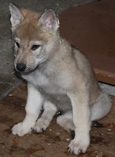 Ferris von der Wolfsranch