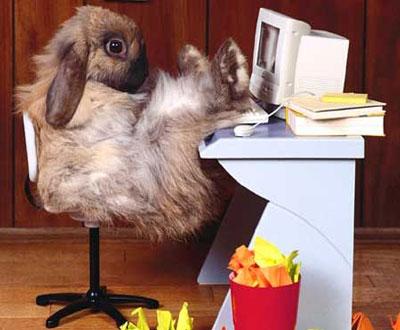 Lustige Osterhasen Bilder - Witzige Osterkarten, lustige Grusskarten zu Ostern ClickPix