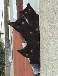 Els gats negres et vigilen