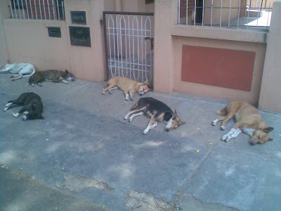 bangalore stray dogs