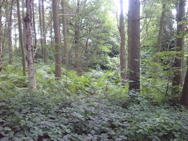 Cottingley wood