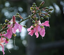 Palo Borracho Flora