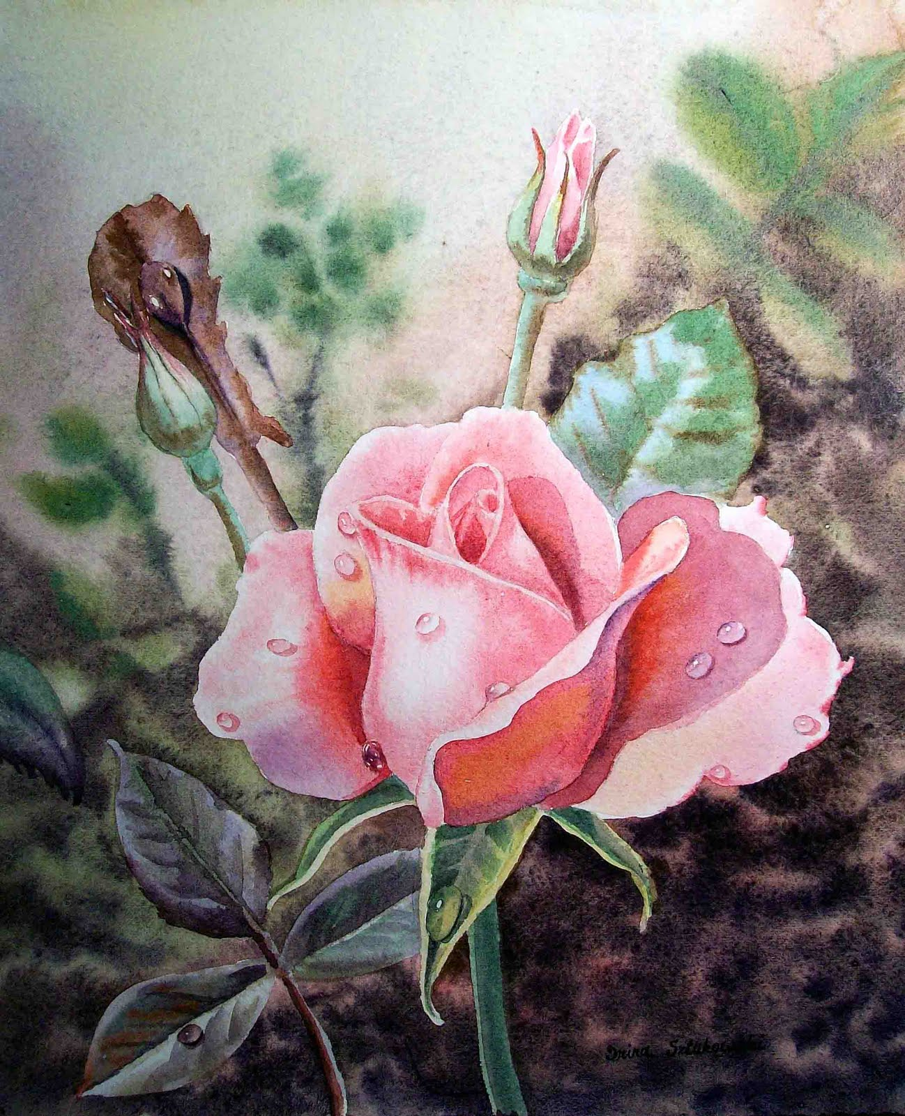 Irina sztukowski fine art pink rose with the dew drops for How to paint a rose watercolor
