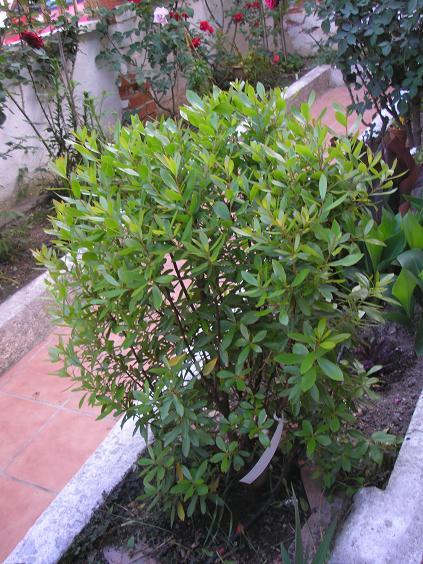 El jardin de pepa arbustos herbaceas anuales - Arbustos de jardin ...