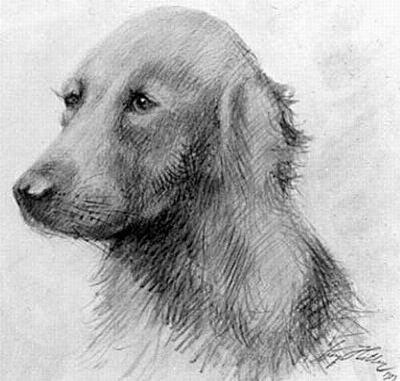 Рисунок Адольфа Гитлера - Собака