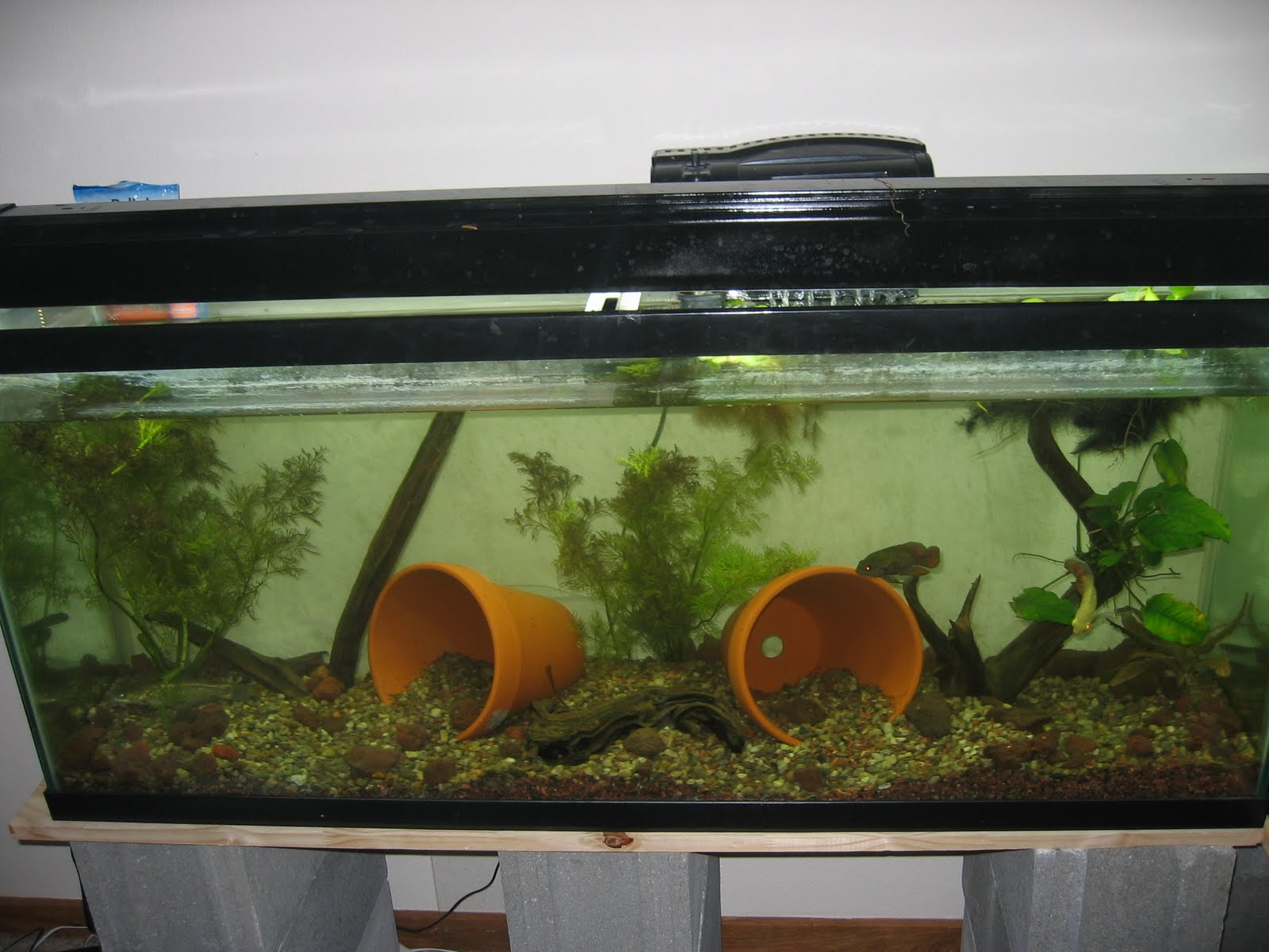 Terra cotta pots in aquarium 1000 aquarium ideas for Google fish tank mrdoob