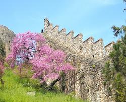 Spring in Rumeli Hisari