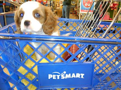 Roxy at Petsmart