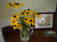 Black Eyed Susans 002