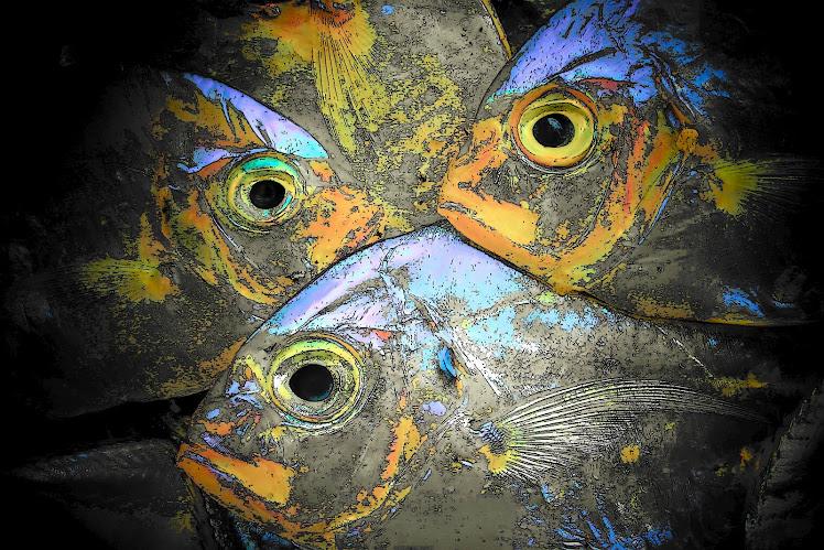 Tiga Mata Ikan. 2006