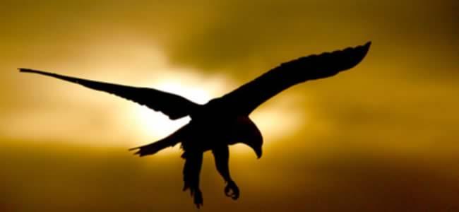 Volando hacia los vientos