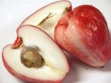 Malay Apple (Otaheite Apple)