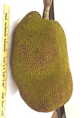 Jackfruit